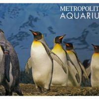 Epicolor Plush Penguins